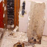 side effects of black mold exposure in home