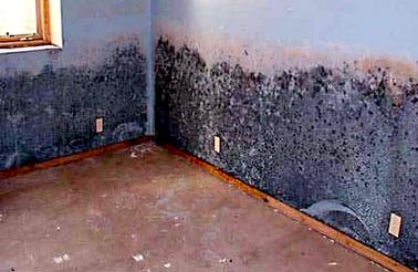 long term effects of exposure to black mold