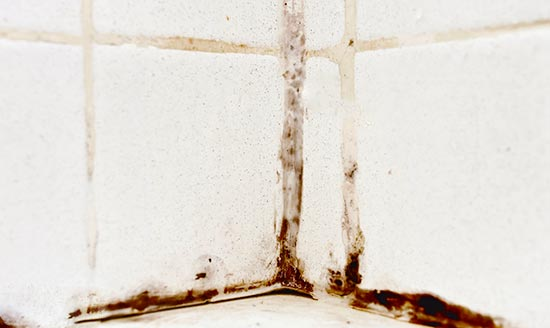 mold behind grout in shower