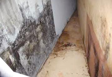 symptoms of mold exposure in the home