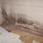 How To Clean Black Mold In Shower