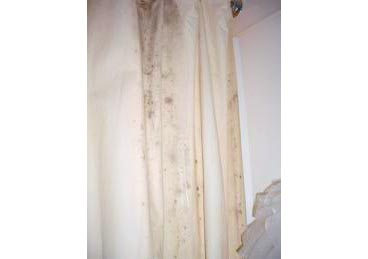mould on shower curtains cleaning