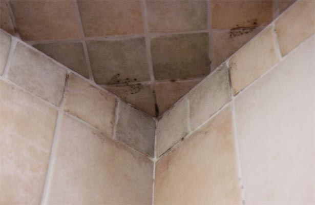 removing mold from grout in the shower