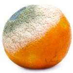 Green Mold Orange Dangerous to eat and your Health