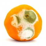 Orange Fruit Mold