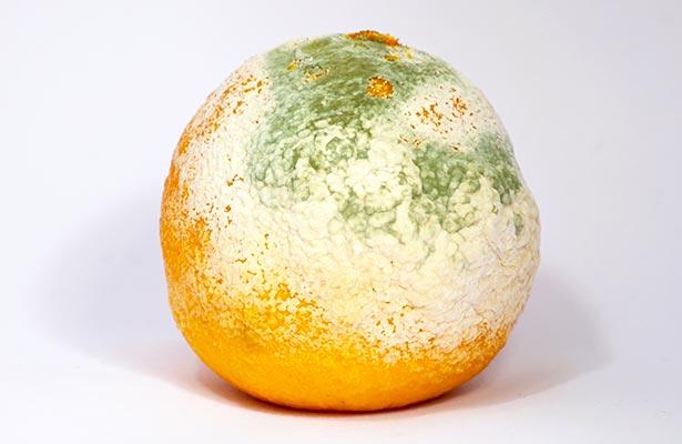 Orange Mold And Penicillin
