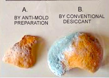 Orange Mold Experiment result