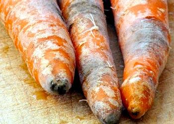 Orange Mold Safe To Eat
