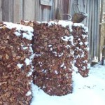 Orange Mold In Compost, The Bad Problem and Dangers