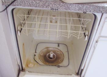 dishwasher mold problems