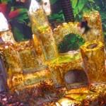 Orange Mold in Fish Tank