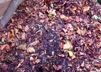 leaf mold compost houston