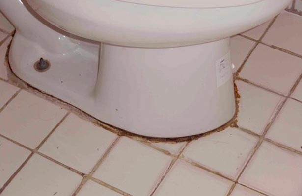 mold in toilet cistern