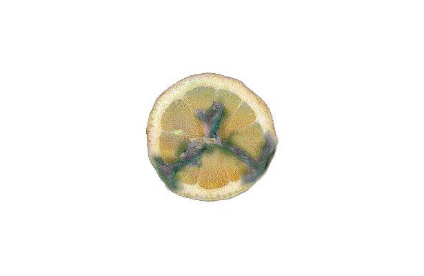 orange mold penicillin