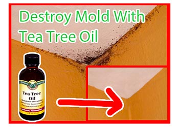 orange oil mold treatment