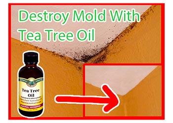 orange oil mold treatment