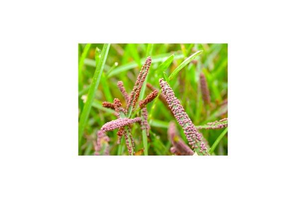 orange spores on grass