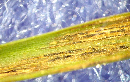 All You Need to Know About Orange Colored Grass Mold