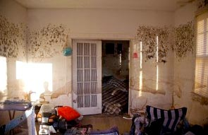 Health Symptoms and Risks of Mold in Your Home