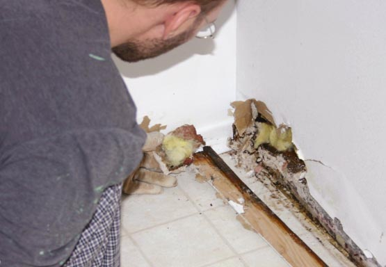 How Common Is Mold in Homes
