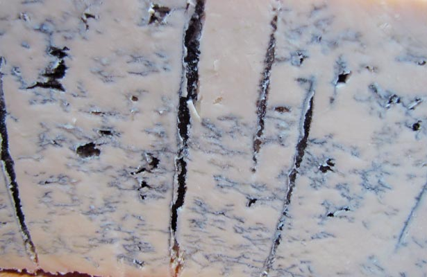Mold On Gorgonzola Cheese