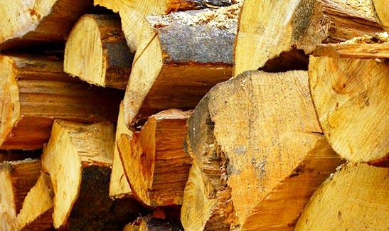 Mold on Firewood