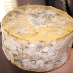 White And Orange Mold On Gorgonzola