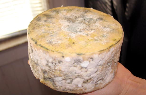 Mold on Gorgonzola