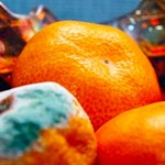 Orange Mold In Fridge And Cleaning the Refrigerator