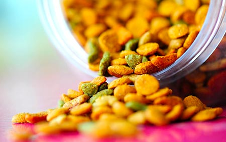 Orange Mold in Food Bin