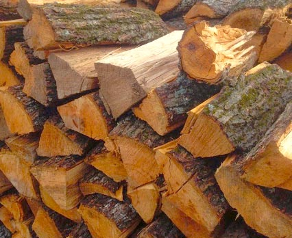 Orange Mold on Firewood it safe or bad