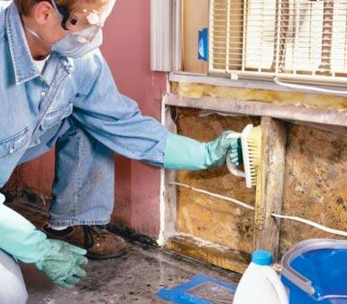 how do i clean mould off walls