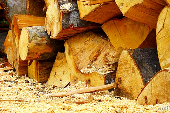 is mold on firewood dangerous