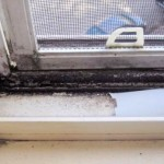 How To Clean Mold and Mildew From Window Sill