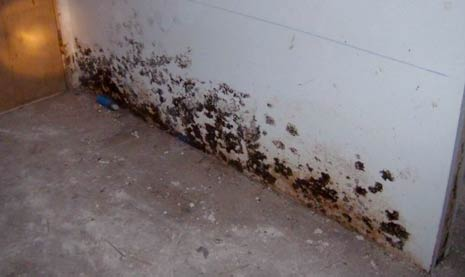 How To Clean Up Black Mold in House