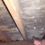How To Remove Mold and Mildew From Attic