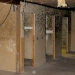 How to Recognize and Get Rid Mold Spores in Home