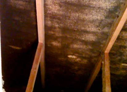 Mold on Attic