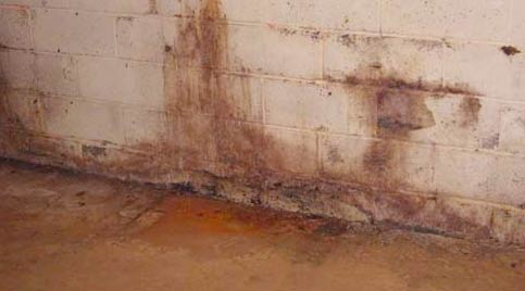 how to get rid of black mold in basement