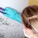 How to Get Rid and Remove Mold From Basement