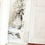 I Have Founded Mold In My House, What should I Do?