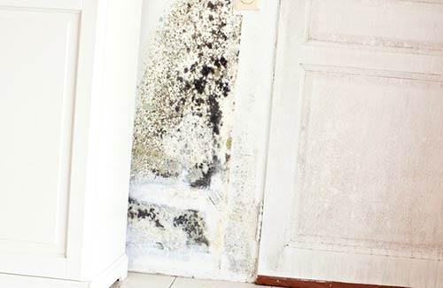 I Have Founded Mold In My House, What should I Do