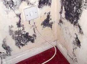 Black Mold on Walls