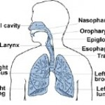 Side Effects Of Breathing In Mold