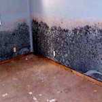 Is Black Mold Bad For You