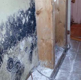Is Black Mold Harmful to humans health