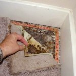 What Are The Symptoms Of Mold In Your Home