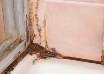 Get Rid Mold In Bathroom