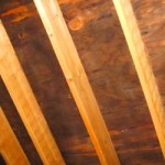 How To Get Rid Of Black Mold On Wood And Plywood