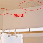 How To Get Rid of Black Mold On Drywall